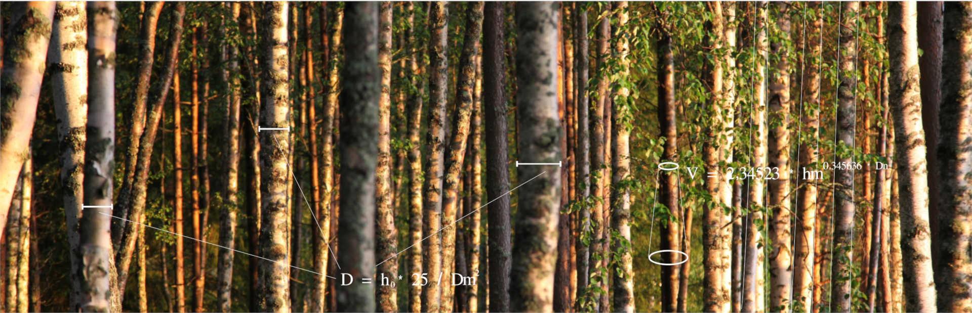 I+D Forestal